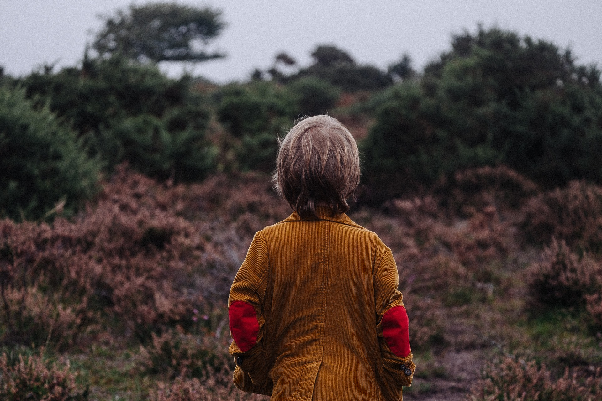 nature boosts children learning